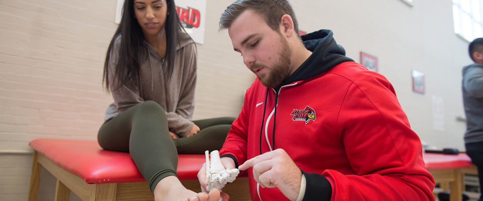 An athletic training student showing a skeleton model of a foot.
